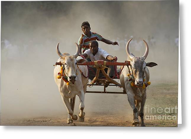 Main Street Greeting Cards - Bullock cart race 5 Greeting Card by Milind Ketkar