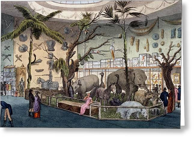 Zoology Greeting Cards - Bullocks Museum, 22 Piccadilly, London Greeting Card by English School