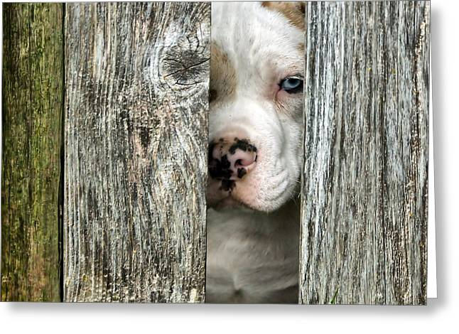 Friendly Puppy Greeting Cards - Bulls Eye - English Bulldog Greeting Card by Nikolyn McDonald