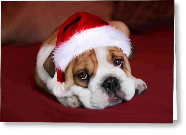 Bully For Santa Greeting Card by Julie L Hoddinott