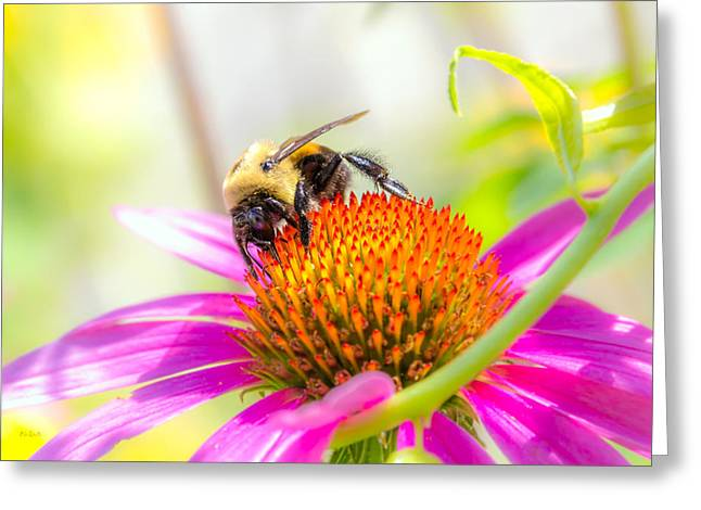 Bees Greeting Cards - Bumble Bee Greeting Card by Bob Orsillo