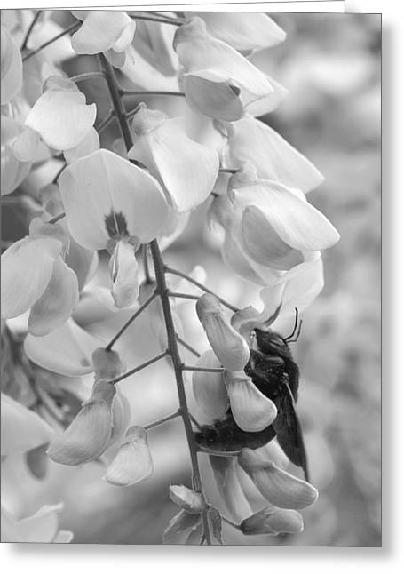 Wisteria In Bloom Greeting Cards - Bumble Bee BW Greeting Card by Janice Sullivan