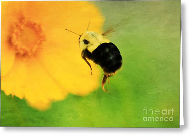 Pollenation Greeting Cards - Bumble Bee Greeting Card by Darren Fisher