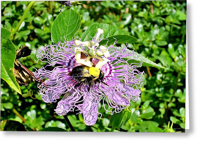 At Work Greeting Cards - Bumble Bee Haven Greeting Card by Alice Kay H