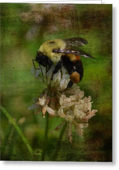 Vintage Greeting Cards - Bumble Bee Serenade Nbr 3 Macro Greeting Card by Lesa Fine