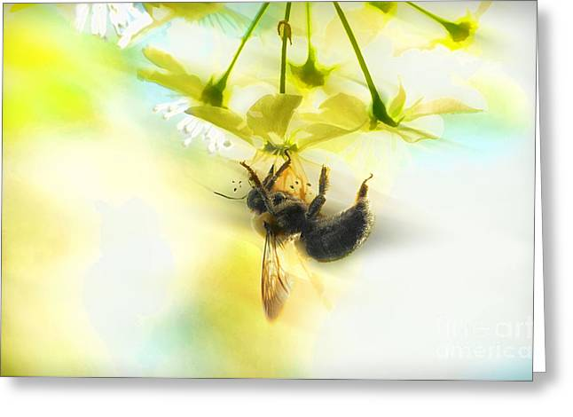 Bumble Going In For The Nectar Greeting Card by Dan Friend