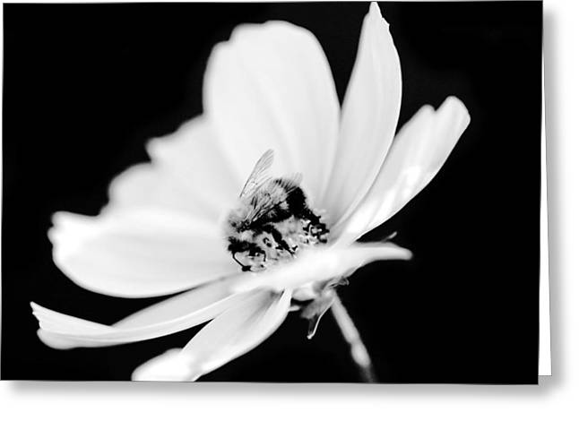 Bumblebee Collect Pollen  Greeting Card by Toppart Sweden