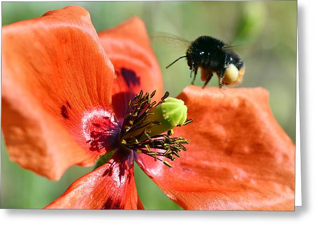Close Up Floral Mixed Media Greeting Cards - Bumblebee macro Greeting Card by Toppart Sweden