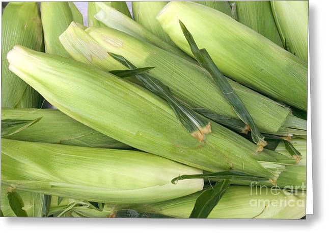 Sweet Corn Farm Greeting Cards - Bunch of corn in husk Greeting Card by James BO  Insogna