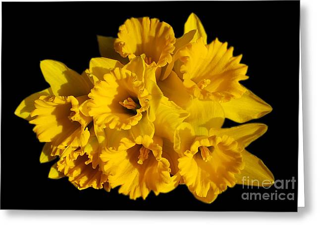 Bunch of Daffodils Greeting Card by JM Braat Photography