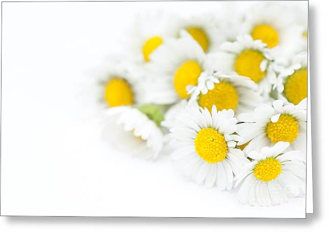 Bunch of Daisies Greeting Card by Anne Gilbert
