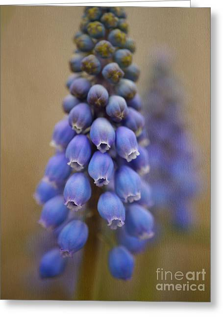 Blue Grapes Greeting Cards - Bunch of Grapes Greeting Card by Irina Wardas