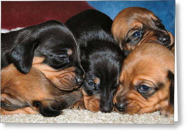Dachshund Puppy Digital Art Greeting Cards - Bunch of Puppies Greeting Card by Anthony Kougl