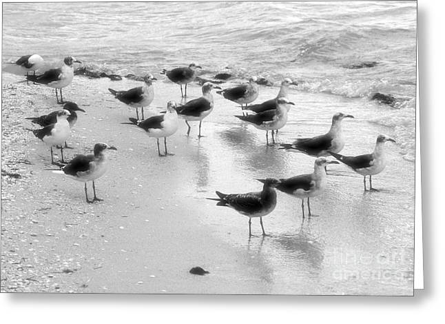 Flying Seagull Greeting Cards - Bunch of seagulls  Greeting Card by Javier Correa
