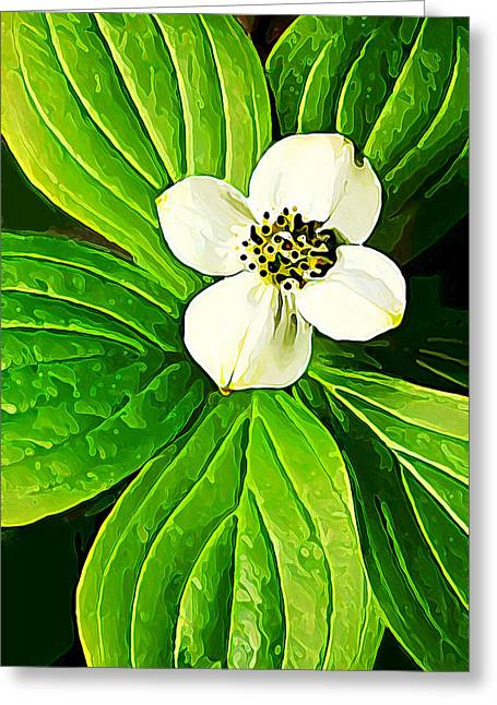 Macro Floral Photos Greeting Cards - Bunchberry Blossom Greeting Card by Bill Caldwell -        ABeautifulSky Photography