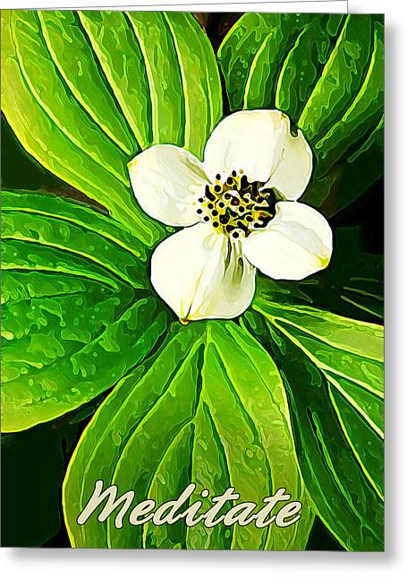 Large White Flower Close Up Greeting Cards - Bunchberry Blossom - Meditate Greeting Card by Bill Caldwell -        ABeautifulSky Photography