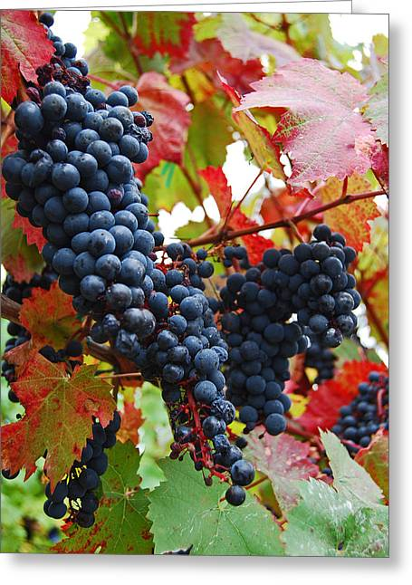 Bunches Of Grapes Greeting Card by Jani Freimann
