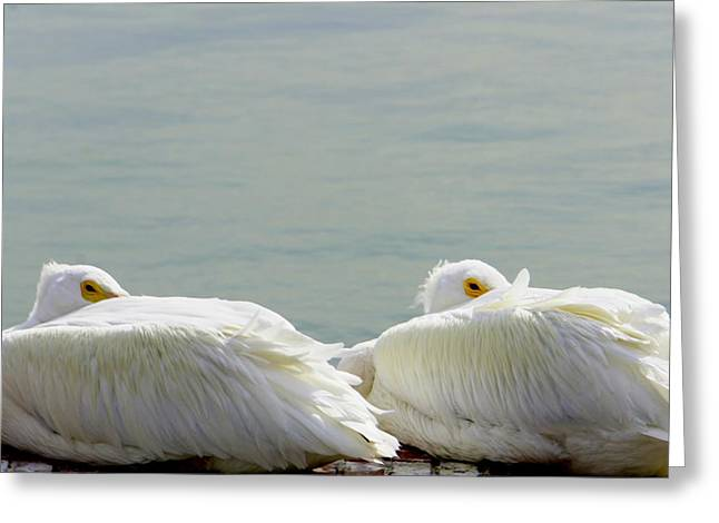 Seabirds Greeting Cards - Bundled Up Greeting Card by Laurie Perry