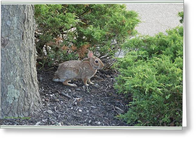 Wildlife Celebration Greeting Cards - Bunny in Bush Greeting Card by Sonali Gangane