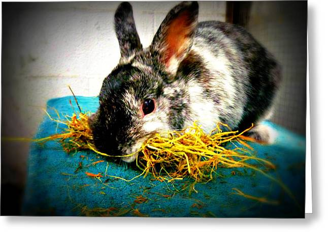 Gray Hair Greeting Cards - Bunny is making a nest Greeting Card by Jo Ann