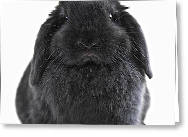 Bunny rabbit Greeting Card by Elena Elisseeva