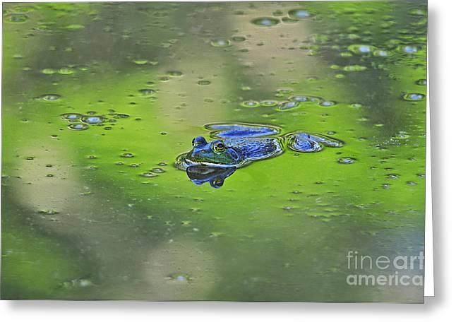 Al Powell Photography Usa Greeting Cards - Buoyant Bullfrog Greeting Card by Al Powell Photography USA