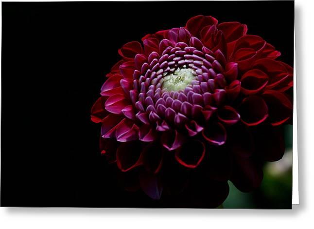 Floral Digital Art Digital Art Greeting Cards - Burgundy Button Greeting Card by Doug Norkum