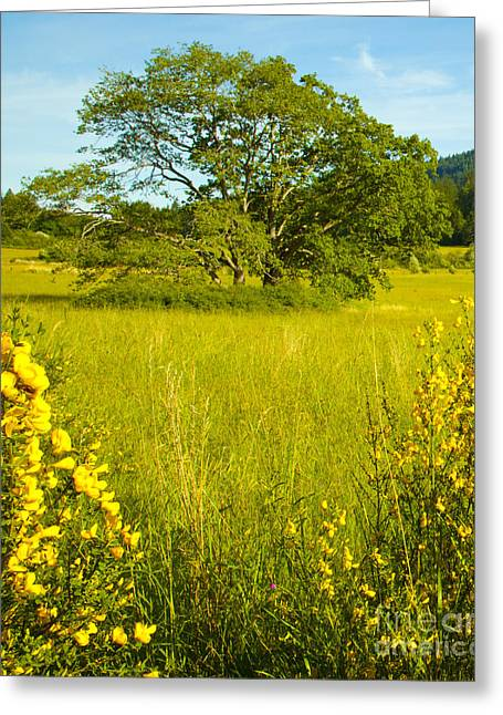 Prospects Greeting Cards - Burgoyne Broom and Maple Greeting Card by Graham Foulkes