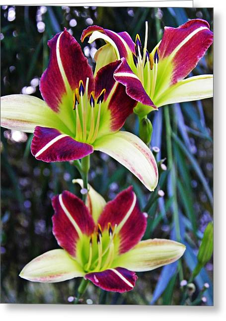 Burgundy Greeting Cards - Burgundy and Yellow Lilies 3 Greeting Card by Sarah Loft