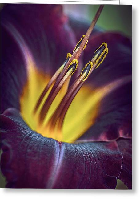 Burgundy Greeting Cards - Burgundy Yellow Daylily Greeting Card by Julie Palencia
