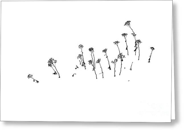 Winter Photos Greeting Cards - Buried by Winter Greeting Card by Al Bourassa