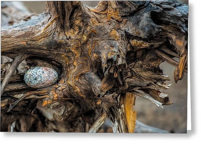 Drift Wood Greeting Cards - Burl and Stone Greeting Card by Paul Freidlund