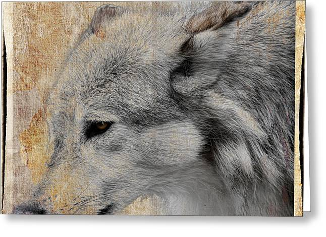 Preditor Greeting Cards - Burlap Grey Wolf Greeting Card by Steve McKinzie