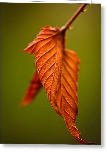 Green Leaves Greeting Cards - Burn Greeting Card by Shane Holsclaw