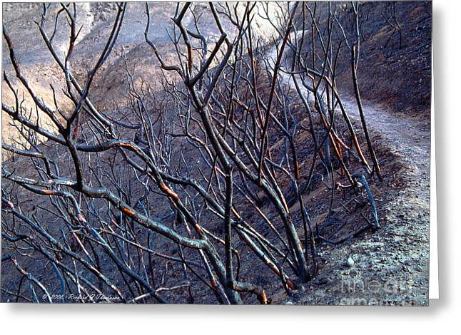 Scorch Trails Greeting Cards - Burned Hiking Trail Greeting Card by Richard J Thompson