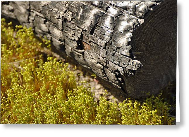Photogaphy Greeting Cards - Burned Log Yellow Grasses Greeting Card by Bruce Gourley