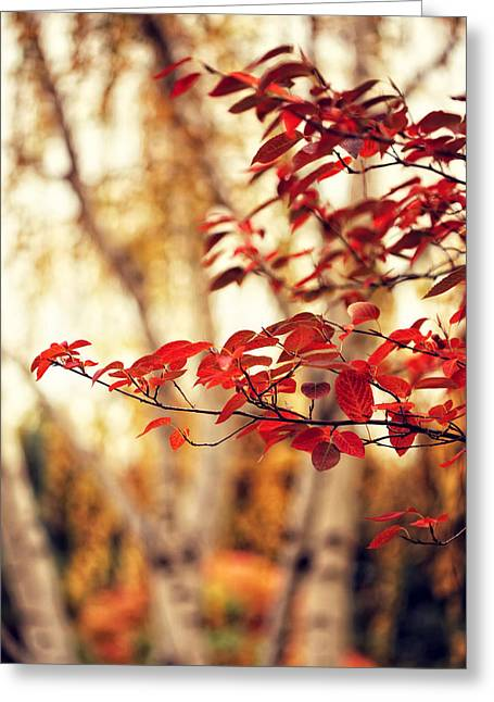 Burning Red - Landscape Tree Photography Nature Greeting Card by Amelia Matarazzo