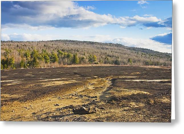 Maine Landscape Greeting Cards - Burnt Blueberry Field In Maine Greeting Card by Keith Webber Jr