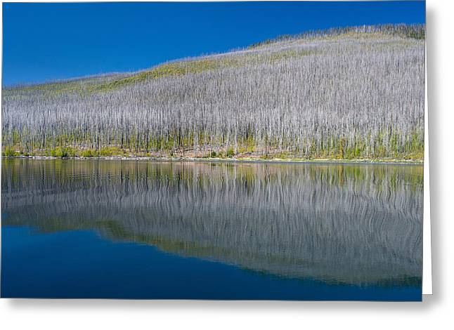 North Fork Greeting Cards - Burnt Forest along Lake McDonald Greeting Card by Greg Nyquist