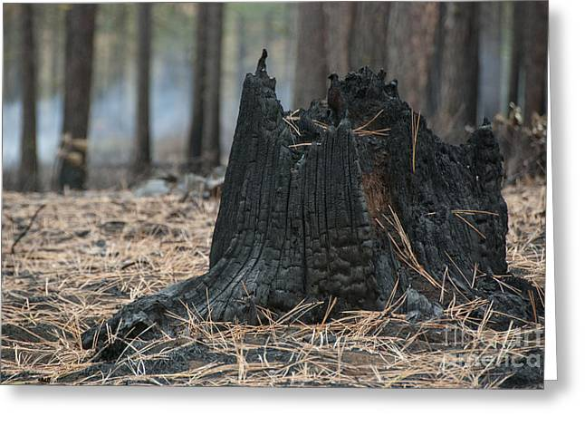 Beauty In Nature Greeting Cards - Burnt Tree Trunk Greeting Card by Juli Scalzi