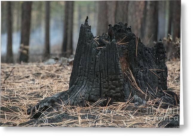 Burnt Tree Trunk Greeting Card by Juli Scalzi