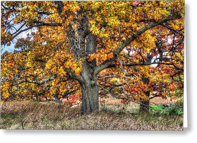 Outlook Greeting Cards - Burr Oak I Greeting Card by Roger Passman