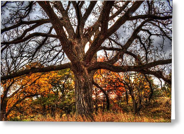 Outlook Greeting Cards - Burr Oak II Greeting Card by Roger Passman