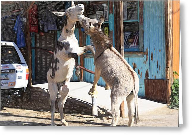 Burros Greeting Cards - Burro Brawl In the Street Greeting Card by Donna Kennedy