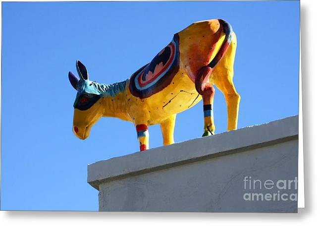 Burros Greeting Cards - Burro Serenade Carrizozo New Mexico Greeting Card by Bob Christopher