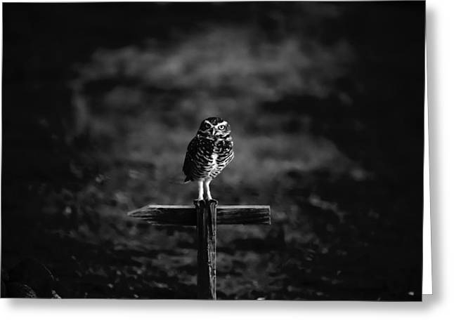 Big Blue Marble Greeting Cards - Burrowing Owl at Dusk Greeting Card by Kelly Gibson