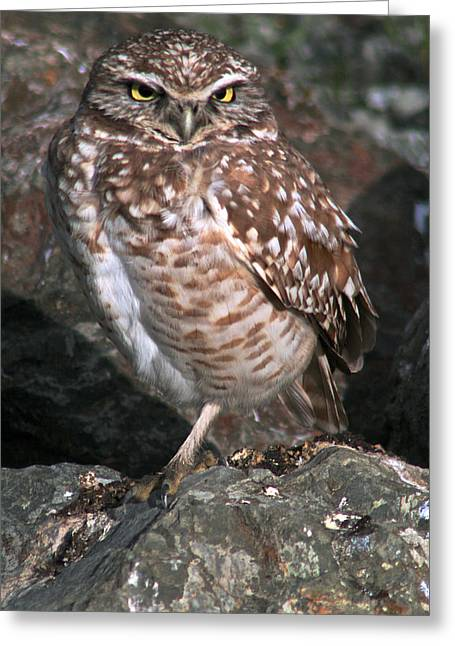 Shade Pyrography Greeting Cards - Burrowing Owl of Berkeley Greeting Card by DUG Harpster