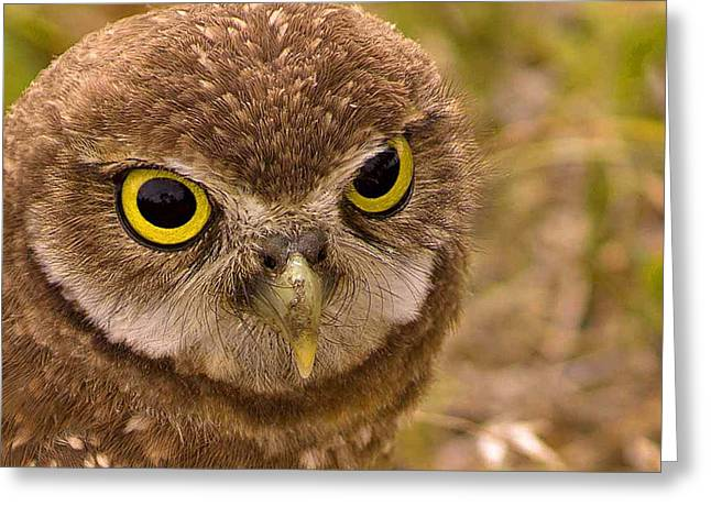 Burrowing Owl Portrait Greeting Card by Anne Rodkin