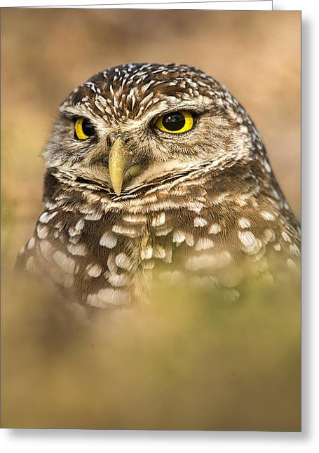 Florida Wildlife Greeting Cards - Burrowing Owl Portrait Greeting Card by Joseph Rossbach