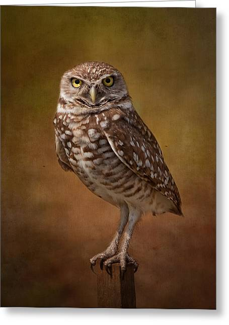 Kim Hojnacki Greeting Cards - Burrowing Owl Portrait Greeting Card by Kim Hojnacki